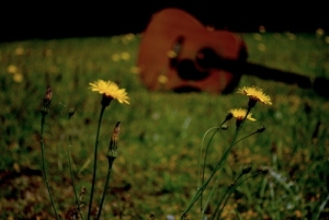 bokeh-flowers-grass-guitar-happy-music-Favim.com-91314
