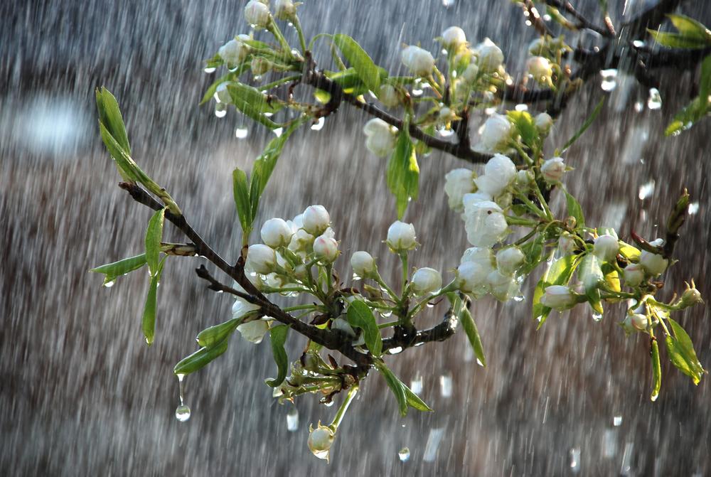 Gostar de chuva (Rain will make the flowers grow) (1/2)